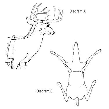 Deer Head Diagram Trusted Wiring Diagram